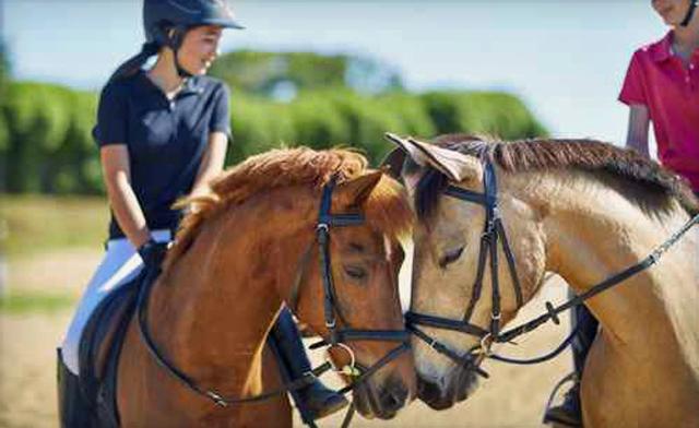 Horseback Dressage Lessons in Loundon County