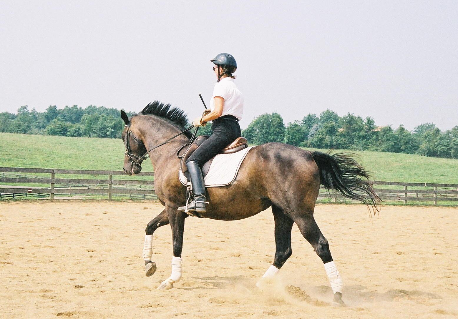 Northern Virginia Horseback Dressage Lessons